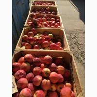 Продам яблукп