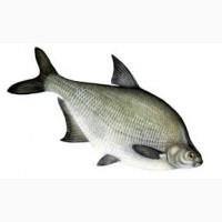 Куплю речную рыбу в ассортименте охлажденную и с/м. Только Опт. Самовывоз. По Украине