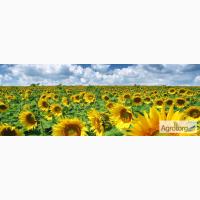 Мегасан, Тунка, 5580 семена подсолнечника Лимагрейн