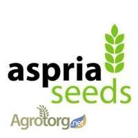 Подсолнечник AS33101 CL, AS33102 CL, AS33103 CL, AS33104 CL (семена под евро-лайтнинг)