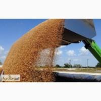 Производим приёмку С/Х продукции Пшеницу разноклассовую