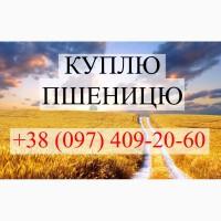 Куплю пшеницю в центрально-західній Україні