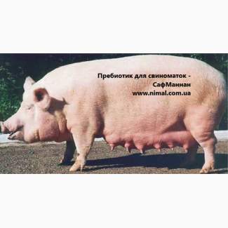 СафМаннан (иммуномодулятор-адсорбент)
