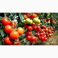 Возьму помидоры по опту