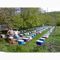 Продам бджоломатки карпатки приймаю замовлення на весну 2019