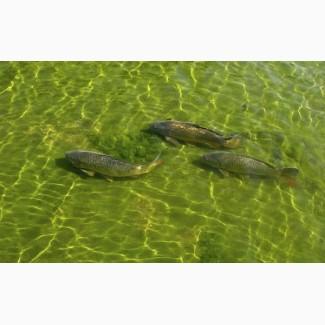 Зарыбление водоёмов