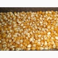 Продам кукурузу фуражную FOB Одесса