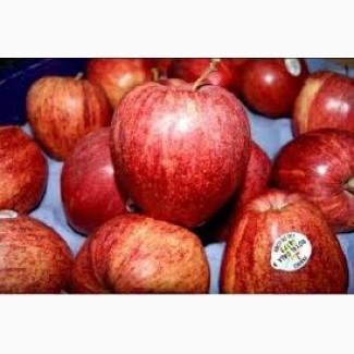 Купим яблоки, 1й сорт, калибр 65+, без парши и боя