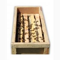 Бджолопакети