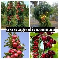 Колоновидные и среднерослые деревья, а также различный кустарник на сайте Агродиво