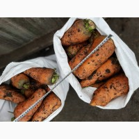 Продаем крупную морковь на переработку