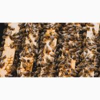Продам бджолосімї та бджолопакети