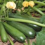 Семена сахарного гороха весовые и пакетированные с первых рук от производителя