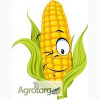 Гибрид кукурузы Вымпел
