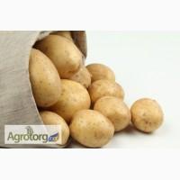 Продам картофель Бора и Ривьера