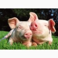 Комбикорм для свиней Гровер (40-70кг)