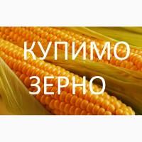 Купимо кукурудзу будь-якої якості (вологу, не кондицію, з підвищеною зерновою)