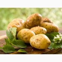 Картофель продадим оптом, Черниговская область