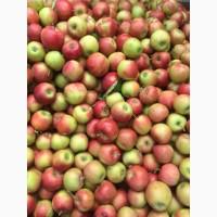Продам яблоки из сада, сорта Чемпион, Голден, Симиренко