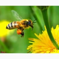 Продам пчёл, Харьков