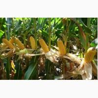 Куплю Кукурузу, а также отходы переработки