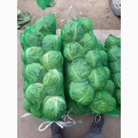 Продам раннюю капусту в Виннице