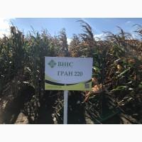 Семена кукурузы Гран 220 (ФАО 210) напрямую от ВНИС