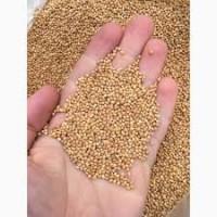Продам семена, лучшего по урожайности Проса: сорт Мироновское 51