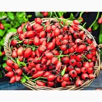 Купуємо свіжу ягоду шипшини. Вся Україна