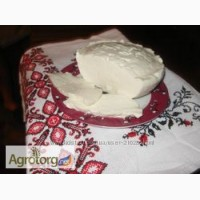 Козий сыр типа пармезан самый лечебный пища богов