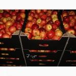 Продам яблоки: Либерти, Флорина, Аскольд, Айдаред, Преам, Теремок, Зимнее Плесецкого