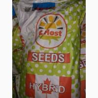 Продам гібрид кукурузи G HOST (Канада) (урож. 2016 р.)