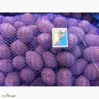Продам семенной картофель оптом от производителя. Отбоный картофель