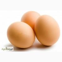 Продам яйца инкубационные
