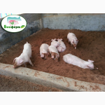 Ферментационная подстилка для животных и птиц Биоферм (Bioferm ) 1 кг -1000 грн