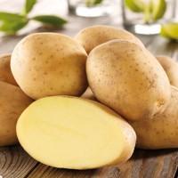 Продажа Картофеля крупным оптом от 1 до 100 тонн в день! Предзаказ
