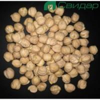 Семена Нута Зехавит-элита (Израиль)