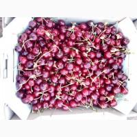 Срочно продам черешню из сада с. Новониколаевка Мелитопольский р-н Запорожской области
