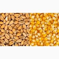 Пшеница экспорт CIF морские порты