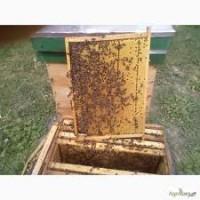Продам бджолопакети та бджолосімї 50шт.Ціна договірна