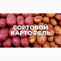 Продаю понад 50+ сортів посадкової картоплі. Також є їстівна