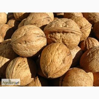 Куплю целый грецкий орех, Новый урожай 2017 года