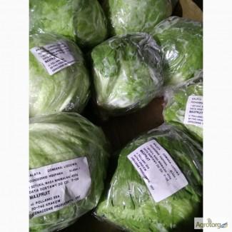 Салат качанный Айсберг. Продажа крупным оптом