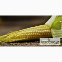 Закупаем кукурузу в Запорожской Донецкой обл