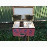 Матка Карпатка 2018 ПЛІДНІ БДЖОЛОМАТКИ ( Пчеломатки, бджолині матки )