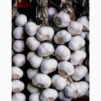 Продам яровой сортовой чеснок украинский белый