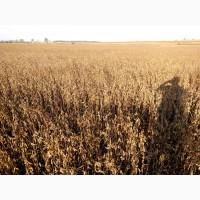 Продам насіння сої першої та другої репродукції, ранньостиглий сорт Ультра