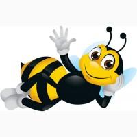 Закупаю мед от 500 вся Украина ( оптом ПОДСОЛНУХ )