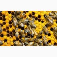 Продам пчелосемьи Одесса