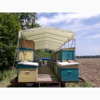 Пчелы продам